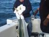 anchorage-charters-bay-of-islands-big-effort